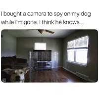 Funny, Camera, and Good: I bought a camera to spy on my dog  while l'm gone. I think he knows Who's a good boy😍😍