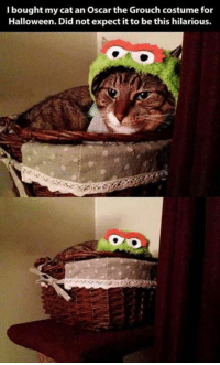 costumes for halloween: I bought my cat an Oscar the Grouch costume for  Halloween. Did not expect it to be this hilarious.