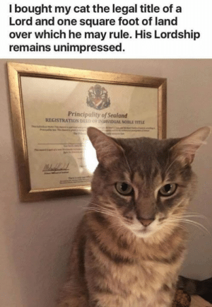 Memes, Square, and 🤖: I bought my cat the legal title of a  Lord and one square foot of land  over which he may rule. His Lordship  remains unimpressed.  Principality of Sealand  REGISTRATION DIED OF İNDIVIDUAL NOBLE TITLE