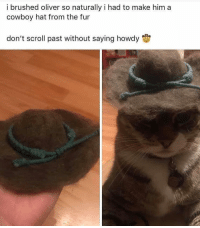 Memes, Cowboy, and 🤖: i brushed oliver so naturally i had to make him a  cowboy hat from the fur  don't scroll past without saying howdy howdee