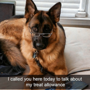 Animals, Memes, and Animal: I called you here today to talk about  my treat allowance Animal Memes Of The Day 33 Pics – Ep49 #animalmemes #dogmemes #catmemes - Lovely Animals World