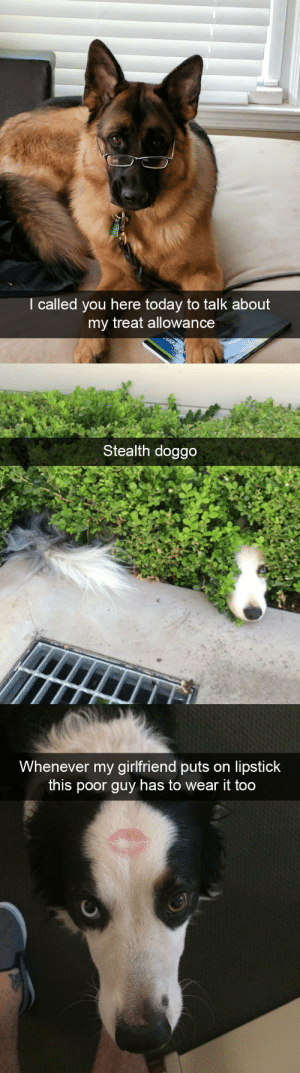 animalsnaps:Dog snaps: I called you here today to talk about  my treat allowance  Scent   Stealth doggo   Whenever my girlfriend puts on lipstick  this poor guy has to wear it too animalsnaps:Dog snaps