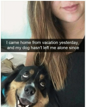 Being Alone, Animals, and Funny: I came home from vacation yesterday,  and my dog hasn't left me alone since 42 Funny Dog Memes That'll Make Your Day! - Lovely Animals World
