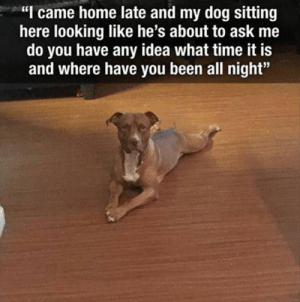 """Dog Memes Of The Day 32 Pics – Ep35 #dogs #doglovers #lovelyanimalsworld - Lovely Animals World: """"I came home late and my dog sitting  here looking like he's about to ask me  do you have any idea what time it is  and where have you been all night"""" Dog Memes Of The Day 32 Pics – Ep35 #dogs #doglovers #lovelyanimalsworld - Lovely Animals World"""