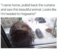 """Beautiful, Memes, and Saw: """"I came home, pulled back the curtains  and saw this beautiful animal. Looks like  I'm headed to Hogwarts!"""" 😊"""
