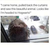 """Beautiful, Funny, and Meme: """"I came home, pulled back the curtains  and saw this beautiful animal. Looks like  I'm headed to Hogwarts!"""" This is still the best @_kevinboner"""