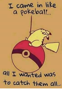 So punny 😂: I came in like  a pokeball.  all I wanted was  to catch them all... So punny 😂