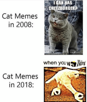 Memes, Cat, and Com: I CAN HAS  CHEEZBURGER  Cat Memes  in 2008:  CHIMSCHEZEURGER.COM  when you Wking  Cat Memes  in 2018: