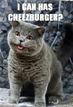 Imgur, Can, and Made: I CAN HAS  CHEEZBURGER  made onl imgur
