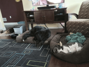 I can only imagine my old pups have comforting dreams.: I can only imagine my old pups have comforting dreams.