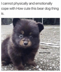 Memes, 🤖, and Bear Dog: I cannot physically and emotionally  cope with How cute this bear dog thing  IS  ONorthwitch69 Someone please... 🎁