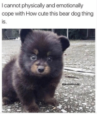 Christmas, Cute, and Memes: I cannot physically and emotionally  cope with How cute this bear dog thing  IS  @North Witch69 Jan. 6 is Armenian Christmas, someone please.. 🎁 😍