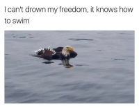 Ass, Bad, and Philadelphia Eagles: I can't drown my freedom, it knows how  to swim <p>Bald eagles are so bad ass</p>