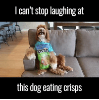Dogs, Memes, and Hilarious: I can't stop laughing at  KOSTT  this dog eating crisps hilarious dog