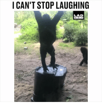 Goals, Memes, and Bible: I CAN'T STOP LAUGHING  LAD  BIBLE Reaching for me goals like... 😂😂