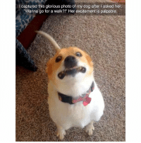 "Funny, Memes, and Best: I captured this glorious photo of my dog after l asked her,  Wanna go for a walk?!"" Her excitement is palpable @instaalcoholic has the best memes"