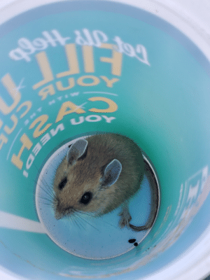 I caught him in a cup. Paid him for the photoshoot with a big string cheese when I freed him.: I caught him in a cup. Paid him for the photoshoot with a big string cheese when I freed him.