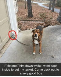 "@satan is actually a professional meme maker and dog whisperer: I ""chained"" him down while I went back  inside to get my jacket. Came back out to  a very good boy @satan is actually a professional meme maker and dog whisperer"