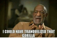 Harambe was gonna get it either way...: I COULD HAVE TRANQUILIZED THAT  GORILLA Harambe was gonna get it either way...