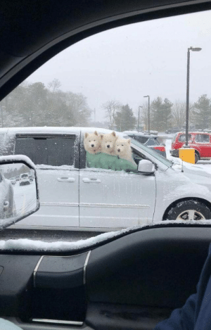 I couldn't believe what I was seeing when I pulled up next to these three amidst a snowstorm (via): I couldn't believe what I was seeing when I pulled up next to these three amidst a snowstorm (via)