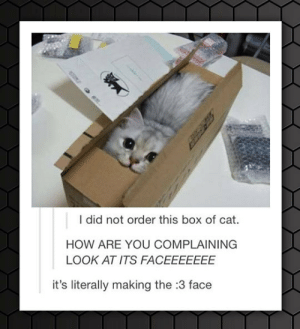 Tumblr, Blog, and How: I did not order this box of cat.  HOW ARE YOU COMPLAINING  LOOK AT ITS FACEEEEEEE  it's literally making the :3 face lolzandtrollz:  Box Of Cat