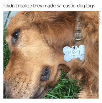 Funny, Shit, and Lost: I didn't realize they made sarcastic dog tags  OH SHIT  I'M LOST Well they do