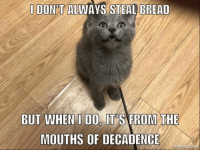 Okay folks Chris Cornell needs a furever home, so please share away this great meme that Ivana Patricelli made for him:): I DON'T ALWAYS STEAL BREAD  BUT WHEN I DO IT'S FROM THE  MOUTHS OF DECADENCE Okay folks Chris Cornell needs a furever home, so please share away this great meme that Ivana Patricelli made for him:)