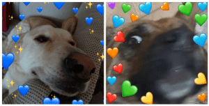 I DON'T CARE IF YOU DONT CARE BUT I MADE MY DOGS INTO ONE OF THOSE WHOLESOME HEART MEMES!!: I DON'T CARE IF YOU DONT CARE BUT I MADE MY DOGS INTO ONE OF THOSE WHOLESOME HEART MEMES!!