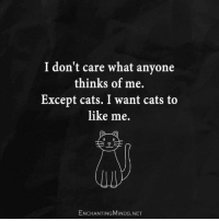 Cats, Memes, and Grumpy Cat: I don't care what anyone  thinks of me.  Except cats. I want cats to  like me.  ENCHANTING MINDs.NET Truth. Via Grumpy Cat Memes