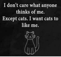 Cats, What, and Like: I don't care what anyone  thinks of me.  Except cats. I want cats to  like me.  2