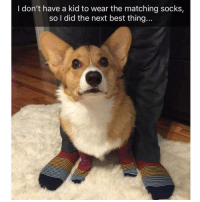 Memes, Best, and 🤖: I don't have a kid to wear the matching socks,  so l did the next best thing... Just about the cutest thing ever | @cuteandfuzzybunch
