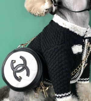 I don't have my own Chanel yet , but my puppy did lol: I don't have my own Chanel yet , but my puppy did lol