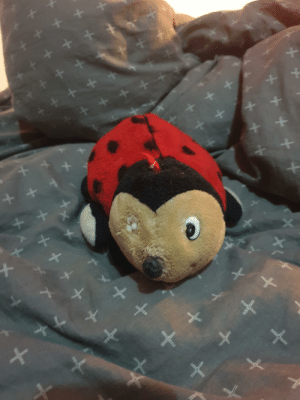 I don't know about you but this was my first ever toy and know i am keeping it in my closet becaus i wan't to remember about it in a few years(I'm not sleeping with it I'm not a baby): I don't know about you but this was my first ever toy and know i am keeping it in my closet becaus i wan't to remember about it in a few years(I'm not sleeping with it I'm not a baby)