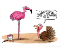 funny thanksgiving: I DON'T KNOW  LARRY... YOU STILL  LOOK LIKE A TURKEY  TO ME.