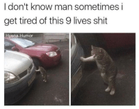 """Memes, Shit, and Http: I don't know man sometimes i  get tired of this 9 lives shit  Hyena Humor <p>Self Aware Cat via /r/memes <a href=""""http://ift.tt/2Ew4QC9"""">http://ift.tt/2Ew4QC9</a></p>"""