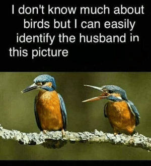 Memes, Birds, and Husband: I don't know much about  birds but I can easily  identify the husband in  this picture