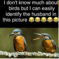 Memes, Birds, and Husband: I don't know much about  birds but l can easily  identify the husband in This is way men have shorter lifespans. Just nagging and whining and complaining and nagging and whining and complaining and nagging and whining and complaining.