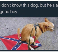Memes, Virgin, and Good: I  don't know this dog, but he'sa  good boy As a BiGender Virgin AC 130 Air craft this triggered me.