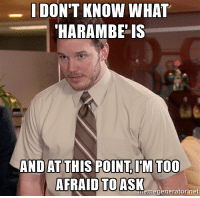 It's all over reddit, and I have no clue.: I DON'T KNOW WHAT  HARAMBE IS  AND AT THIS POINT I'M TOO  AFRAID TO ASK  memegenerator net It's all over reddit, and I have no clue.