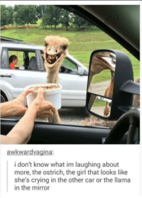 The mirror: i don't know what im laughing about  more, the ostrich, the girl that looks like  she's crying in the other car or the llama  in the mirror The mirror