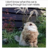 Memes, Relatable, and 🤖: I don't know what this cat is  going through but I can relate. Relatable 😩 @confessionsofablonde confessiondofablonde goodgirlwithbadthoughts 💅🏼