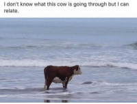 Memes, World, and 🤖: I don't know what this cow is going through but I can  relate Remember when the world was supposed to end in 2012? What happened to that? WHO FUCKED THAT UP