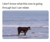 Dank, 🤖, and Cow: I don't know what this cow is going  through but I can relate 😅