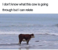 Heart, Cow, and Can: I don't know what this cow is going  through but I can relate *Plays My Heart Will Go On in the background*