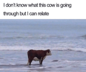 Dank, 🤖, and How: I don't know what this cow is going  through but I can relate How now brown cow.