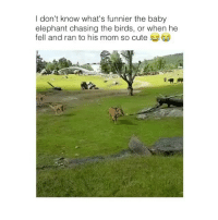 Cute, Lmao, and Memes: I don't know what's funnier the baby  elephant chasing the birds, or when he  fell and ran to his mom so cute lmao that's me! 😂 👉🏻(@bestvines bestvines)
