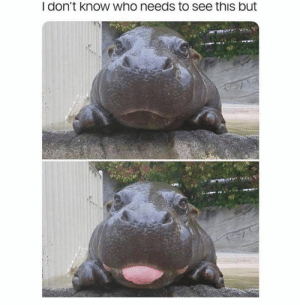 Dank, 🤖, and Who: I don't know who needs to see this but Hippo blep