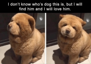 Funny, Love, and Animal: I don't know who's dog this is, but I will  find him and I will love him 22 Funny Animal Pictures Of The Day #funny #picture