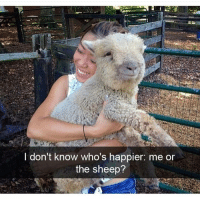 Friday, It's Friday, and Memes: I don't know who's happier: me on  the sheep? It's Friday everyone! 😁