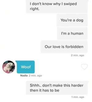 This is so cute: I don't know why I swiped  right.  You're a dog  I'm a human  Our love is forbidden  2 min. ago  Woof  Nadia 2 min. ago  Shh... don't make this harder  then it has to be  1 min. ago This is so cute